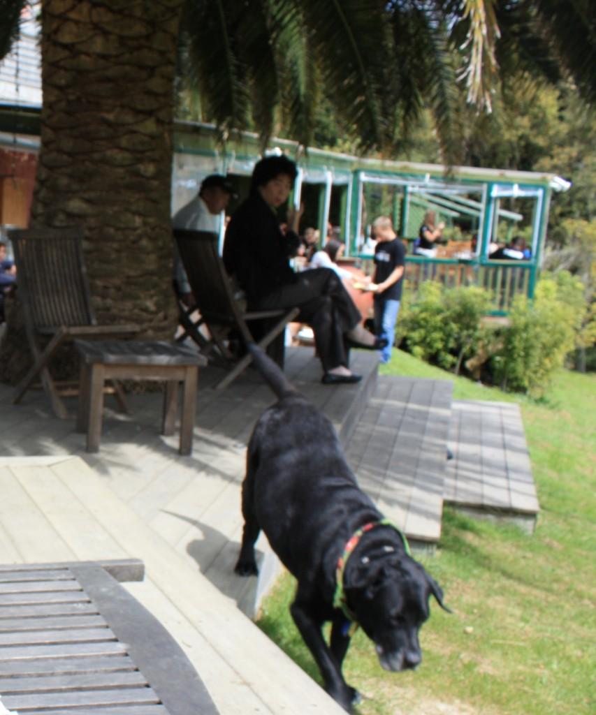 cronicas viajeras auckland perro