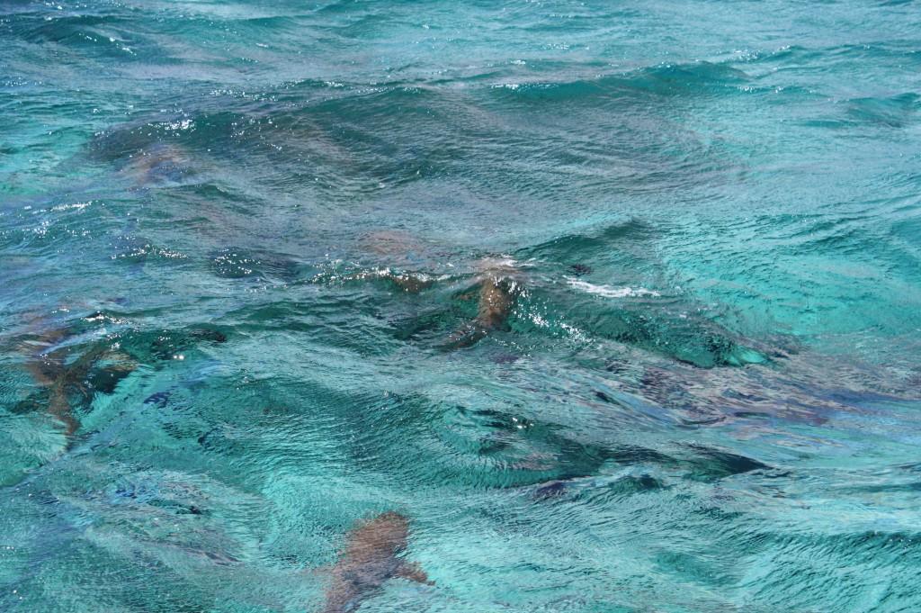 cronicas viajeras moorea tiburon