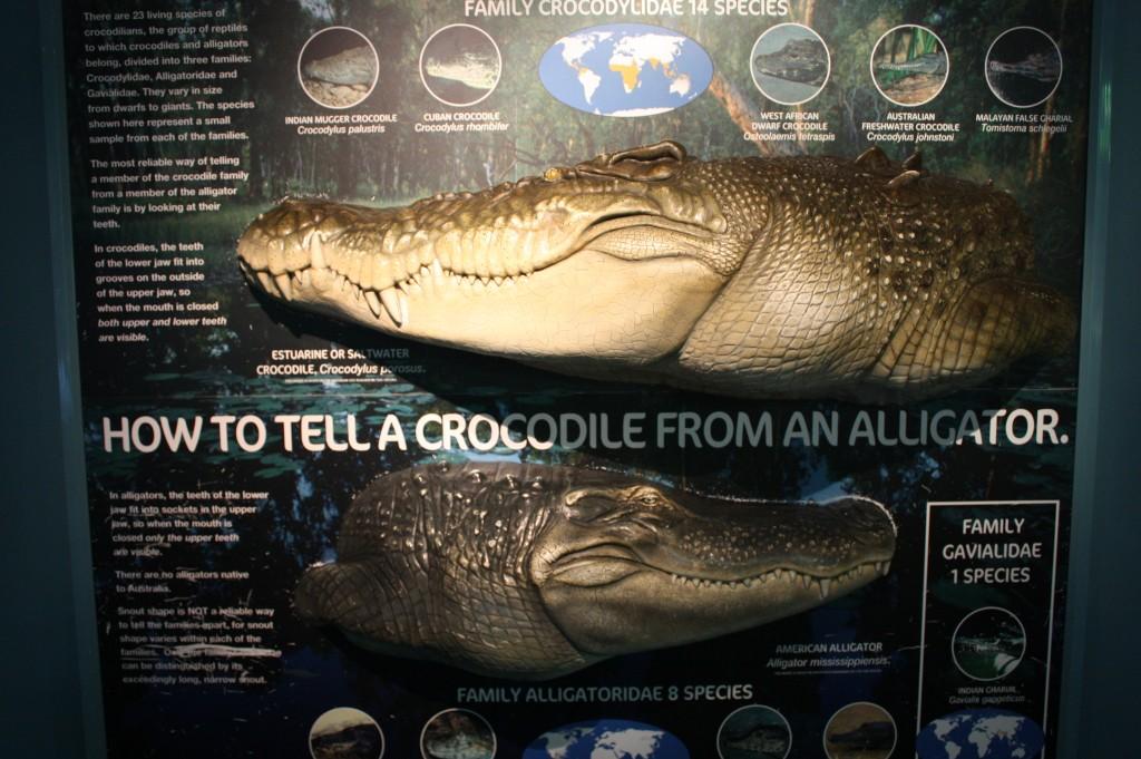 sydney acuario cocodrilo caiman