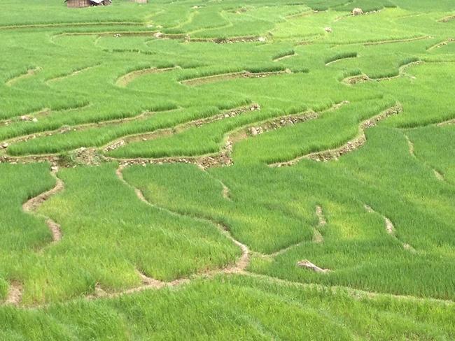 las sinuosas curvas de los arrozales de sapa son casi hipnóticas...
