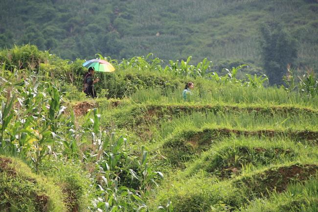 arrozales_sapa_hmong