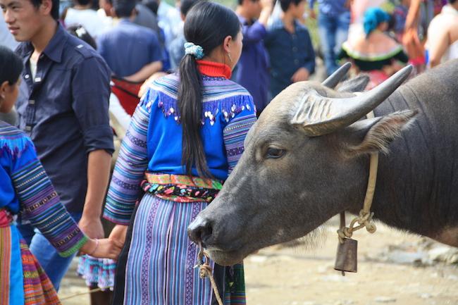 bac_ha_bufalo_hmong
