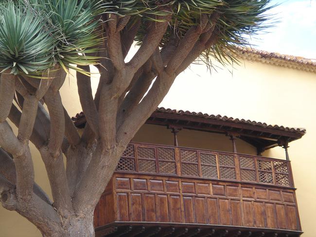 balcon y drago La Laguna