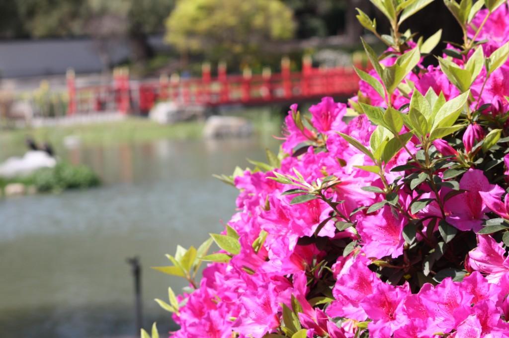 cronicas viajeras jardin japones buenos aires 3