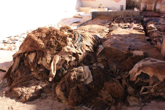 pieles de cammelo en las curtidorias de Marrakech
