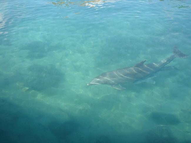 delfin puerto aventuras