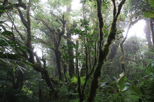 epifitas_lluvia_monteverde