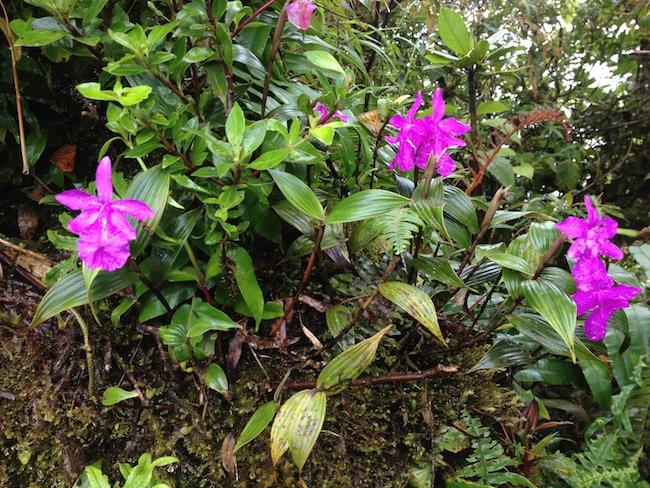 flores_bosque_nuboso_monteverde