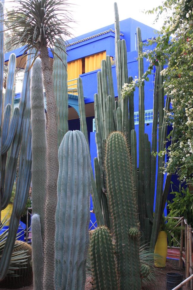 El jardín dispone de cactus de todo el mundo