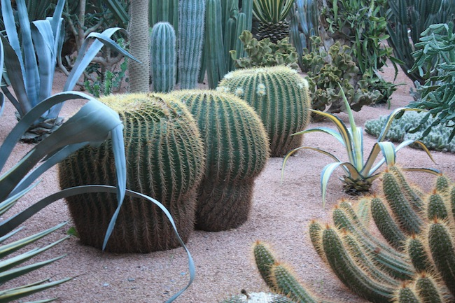 Cactus en el Jardín Majorelle de Marrakech