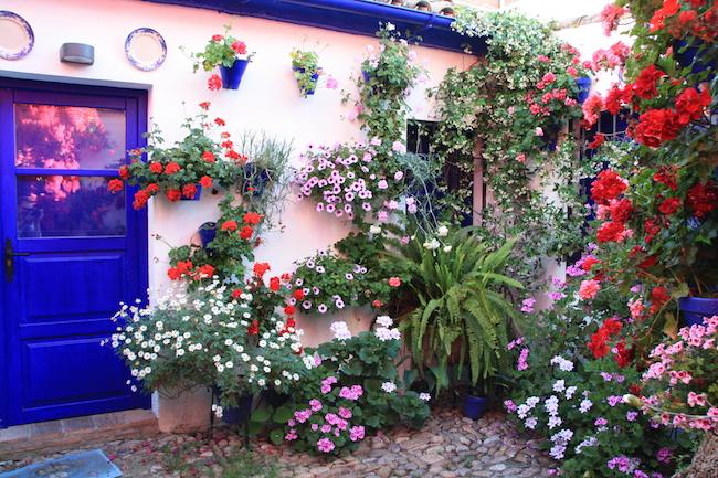 """En el número 4 de la calle de San Juan de Palomares está el """"patio de Josefita"""" hoy de propiedad municipal, con una impresionante buganvilla. Fue el patio más premiado en la historia del concurso."""