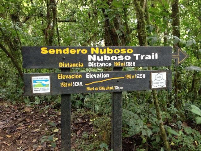 fáciles caminos en el bosque nuboso