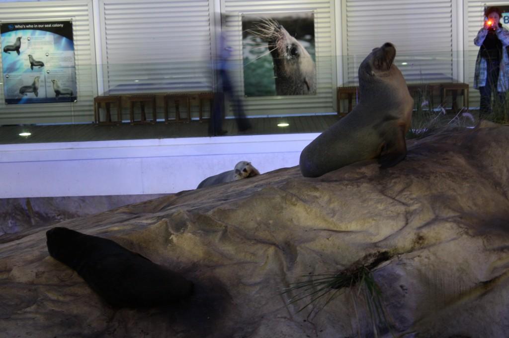 sydney acuario leon marino