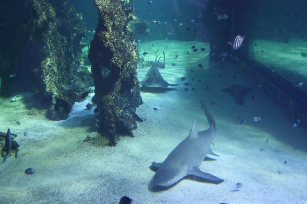 sydney acuario