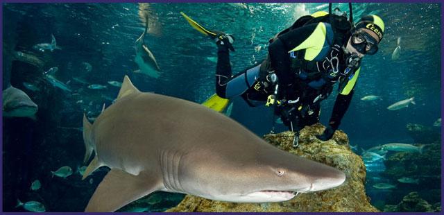 Buceando con tiburones en el Aquarium. Foto de la web www.aquariumbcn.com