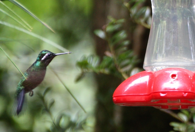 colibries_monteverde