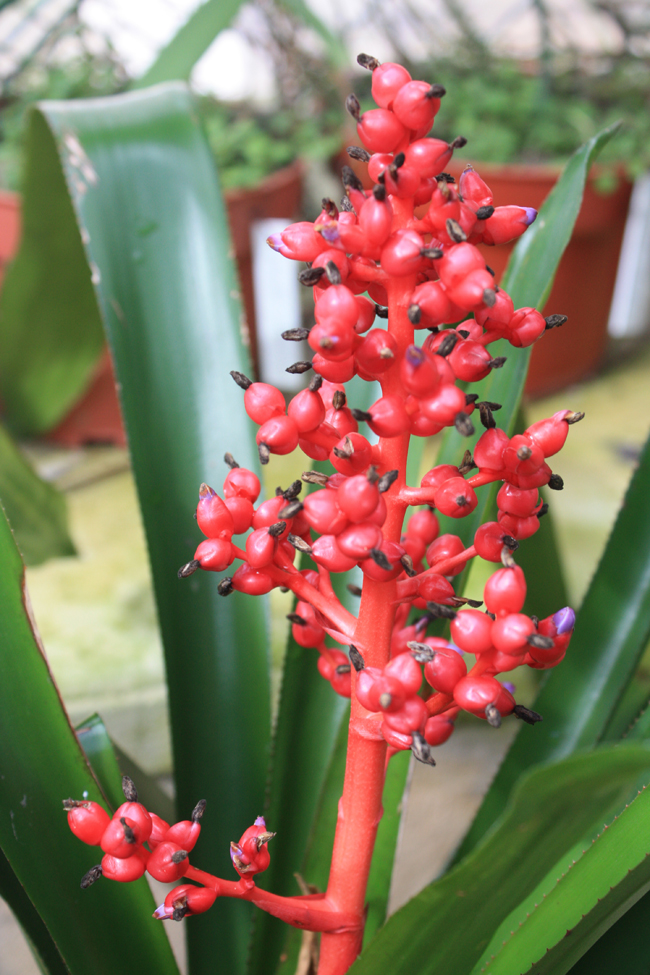 Flores en Xcaret