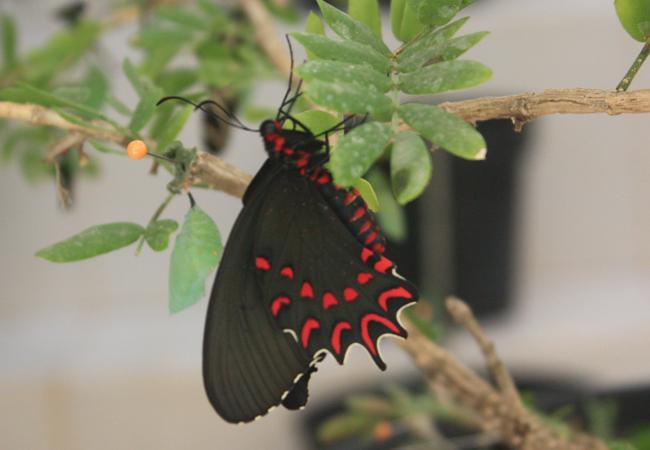 Mariposas en Xcaret