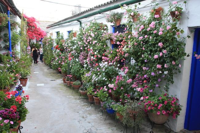 El famoso y llamativo patio del número 6 de la calle Marroquíes se asienta sobre una antigua huerta. El espacio central del patio se ocupó en los años 50 con viviendas para dar cobijo a más familias, lo que confiere este patio en forma de pequeños callejones repletos de flores.