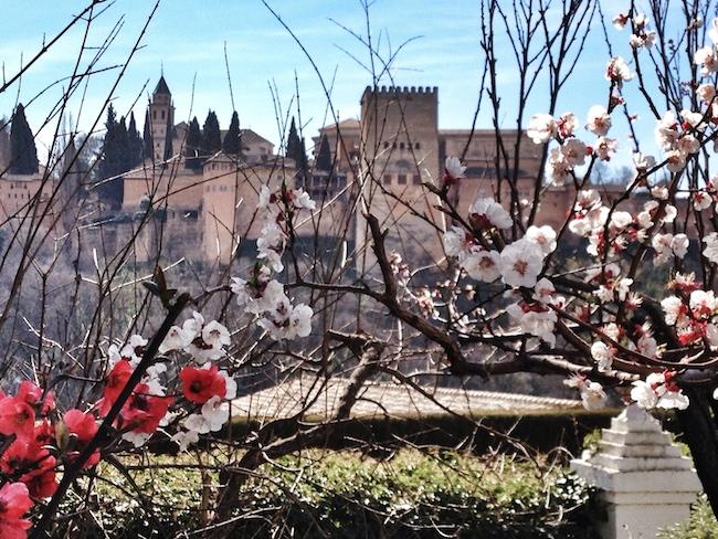 La Alhambra desde los almendros del jardín de la Victoría