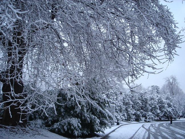 Parque del Retiro durante la nevada de 2005
