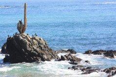 playa el quisco cronicasviajeras