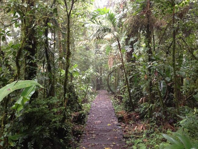 sendero_bosque_nuboso_monteverde