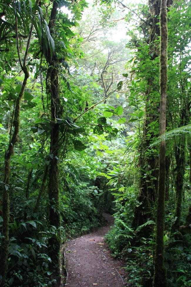 sendero_verde_monteverde
